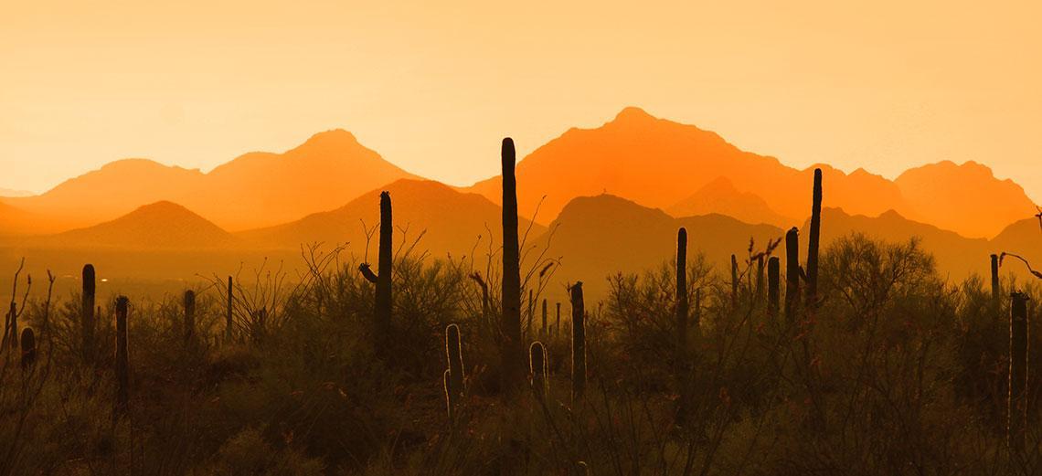 Arizona Trade 2019 - A Year to Remember